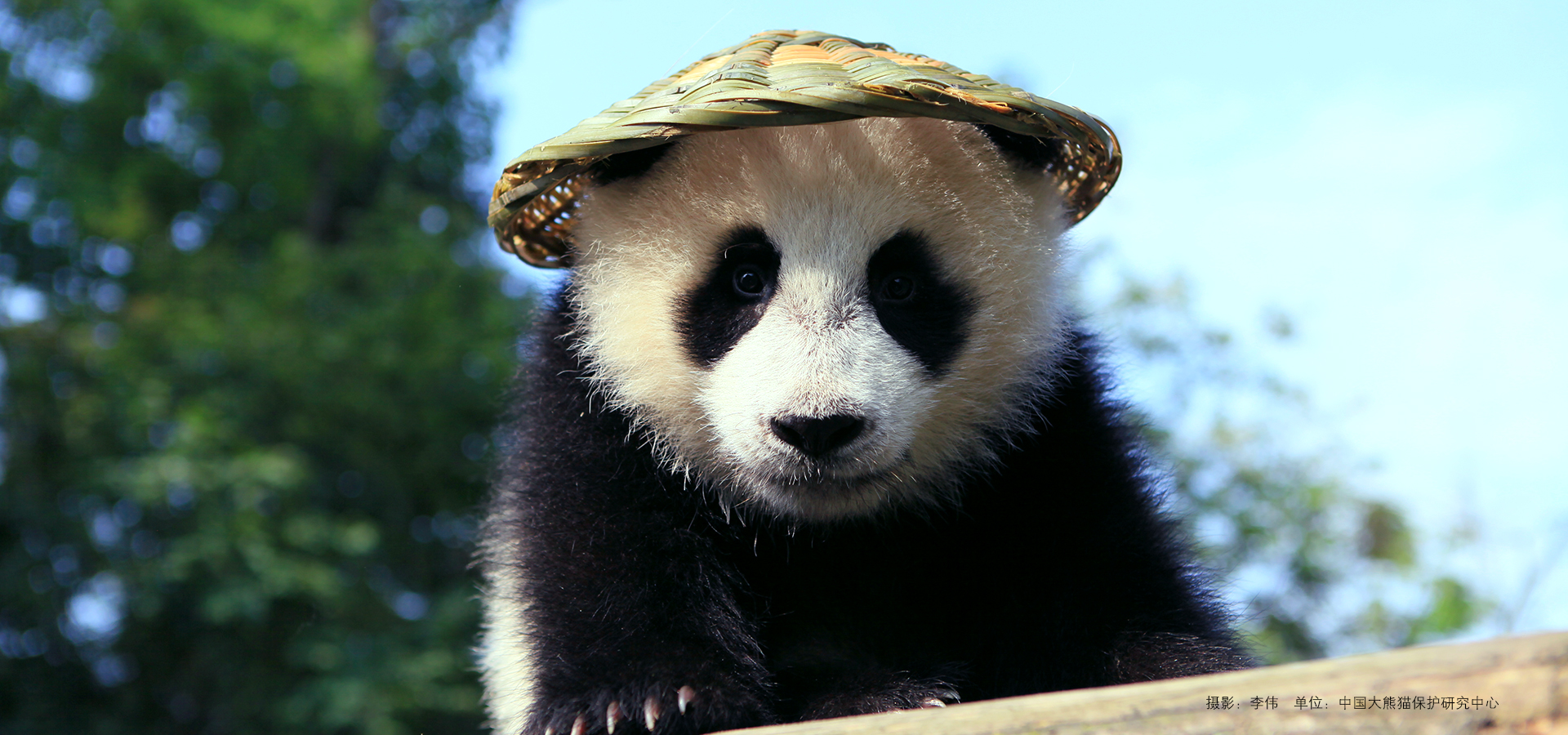 Hi,I'm Kungfu Panda!
