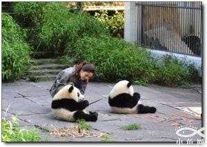 visit panda
