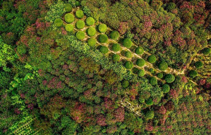 bonsai park