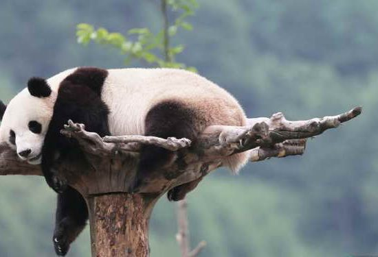 2-Day Panda Keeper and Chengdu Tour