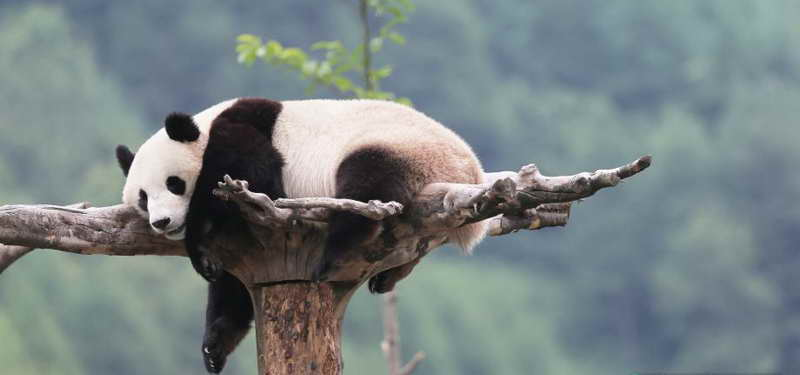 2-Day Panda Keeper and Chengdu Tour