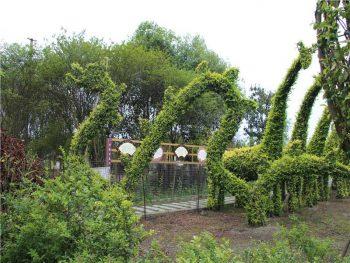 bonsai-garden03
