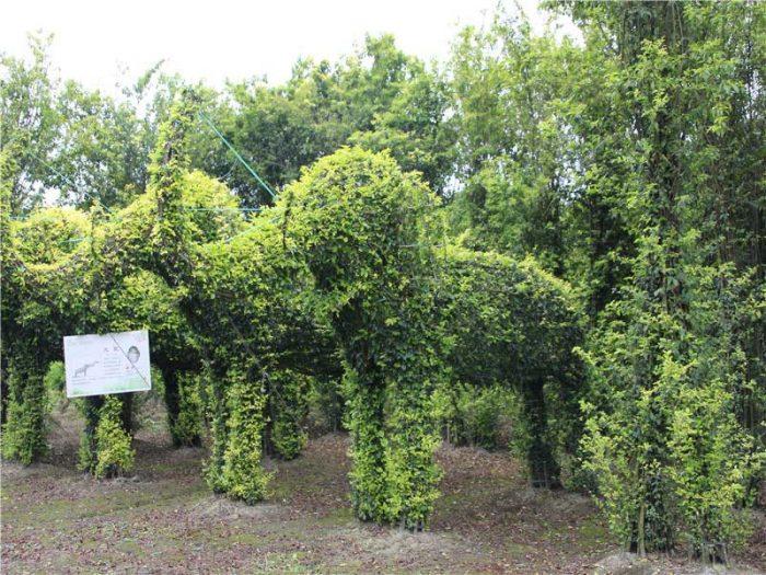 bonsai-garden06