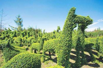 bonsai park scene