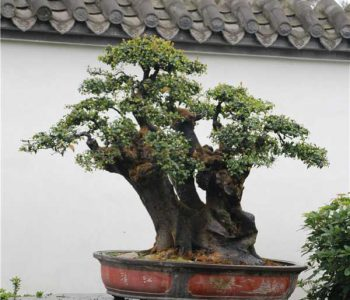 The Bonsai Park(introduction 04)