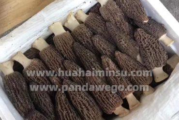 Delicious Morel in Aba Plateau